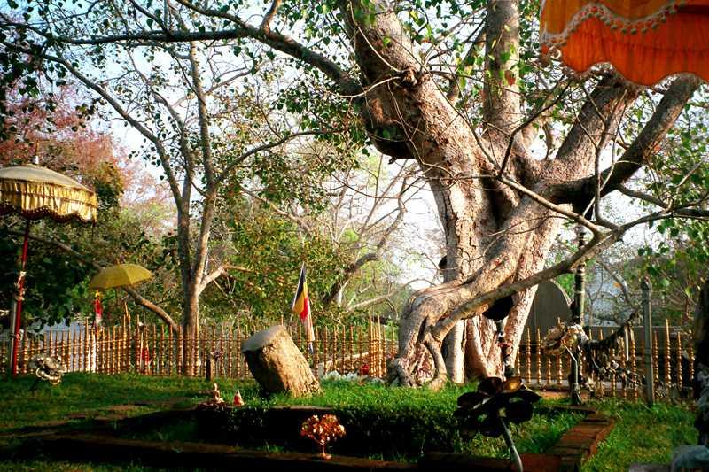 Jaya Sri Maha Bodhi