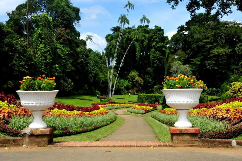 Royal Botanic Gardens Peradeniya