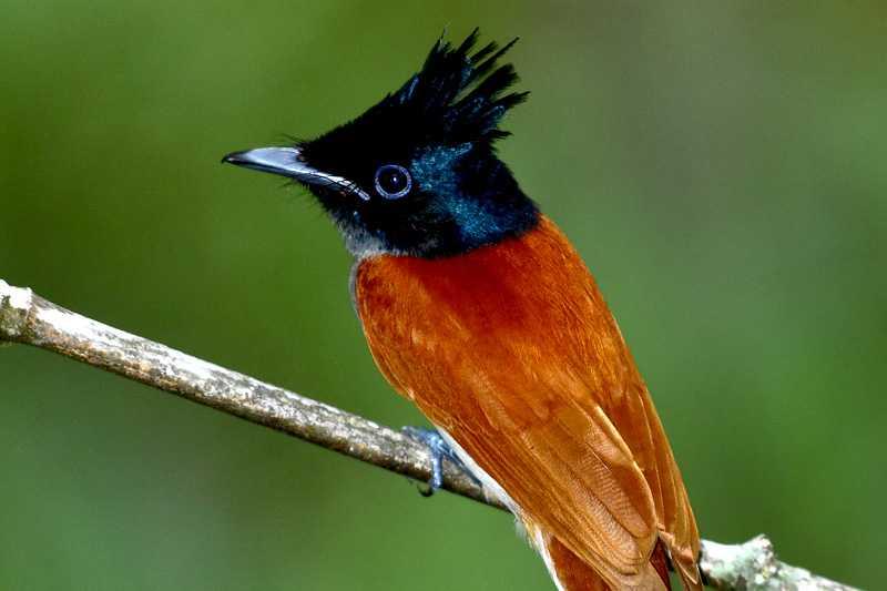 Salgala Forest Reserve